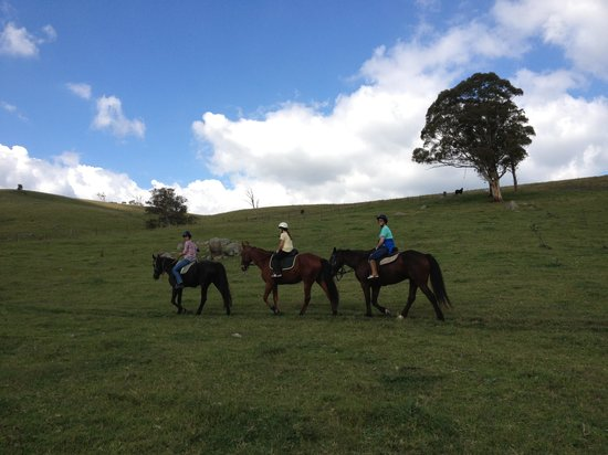 Werriberri Trail Rides: Lovely!