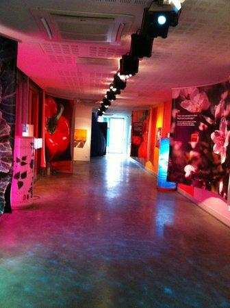 Epicurium : Start of museum