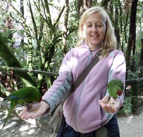 Otorohanga Kiwi House & Native Bird Park : Feeding time :-)