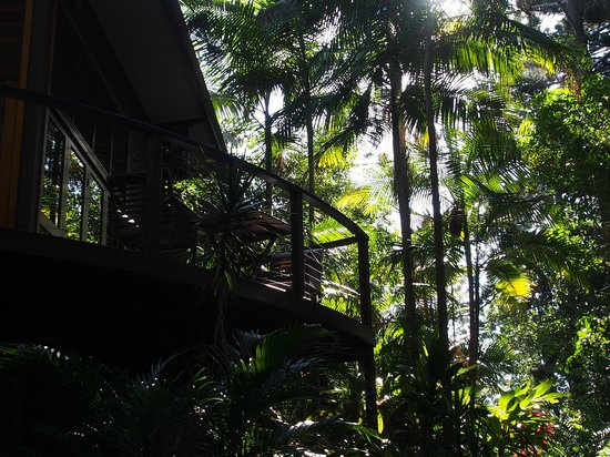 Azabu Boutique Accommodation Byron Bay: Looking up at our balcony from Forest floor - By Samuel M