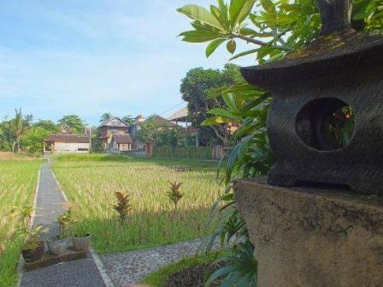 Kebun Indah : View from Mangga Madu