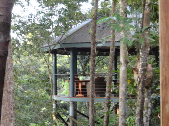 Treehouse Restaurant: treehouse
