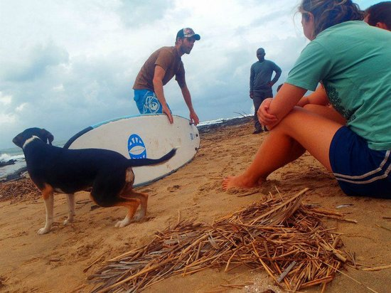 Coffee Shack Backpackers: surfing...
