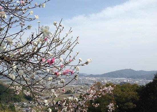 Kiyotakiji Temple: この景色!ぜひ足をとめて眺めてください