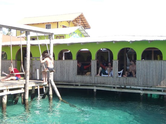 Aqua Lounge Bar & Hostel: Swings and windows