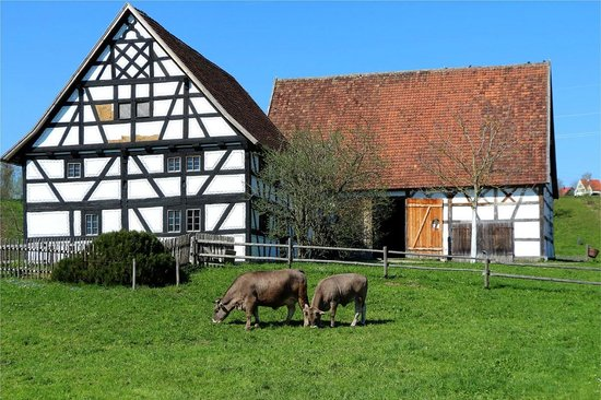 Schwabisches Bauernhofmuseum Illerbeuren: Kuhweide
