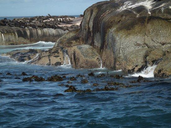 Duiker Island: Foche giù
