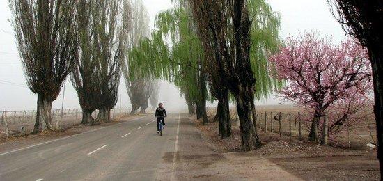 Mendoza Wine Bike Tour: Pedalando pela manhã enevoada de Lujan de Cuyo