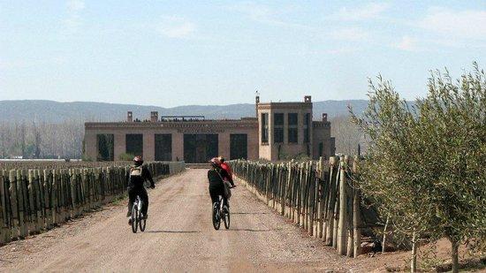 Mendoza Wine Bike Tour: Chegando à Bodega Belasco de Baquedano
