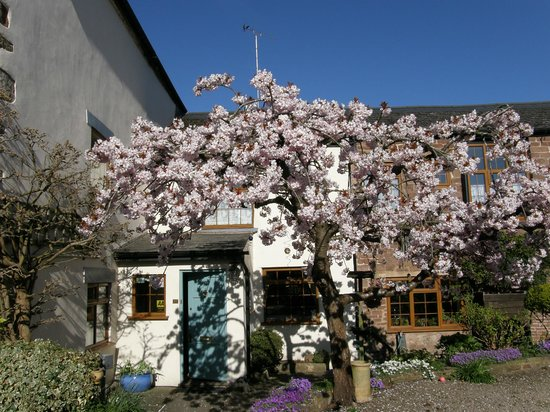 Lea House Bed & Breakfast: Cherry blossom in Spring