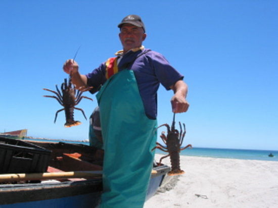 Farr Out Guesthouse: Crayfish in season