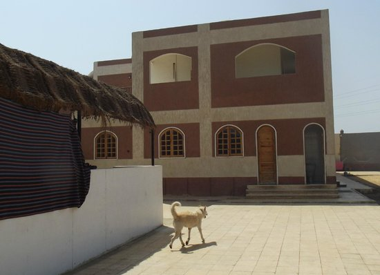 ACE- Animal Care in Egypt: Part of the ACE Animal Care centre, near Luxor.