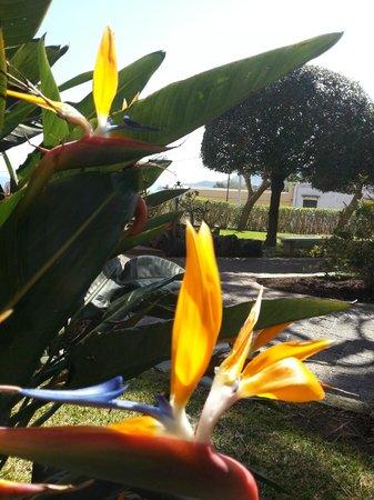 Hotel Terme San Lorenzo: il giardino
