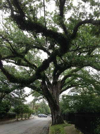 Magic Tours: Oak Treet Along Garden District Street