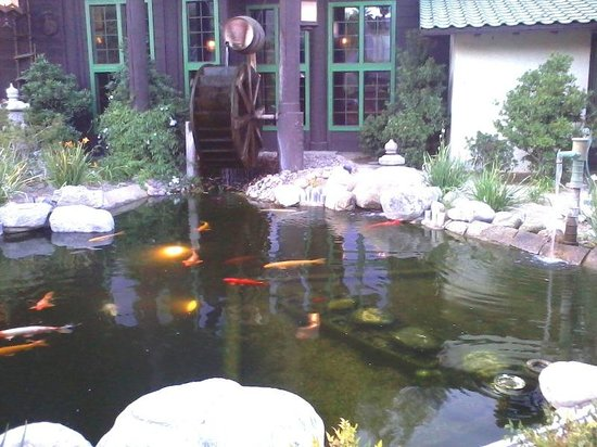 koi fish pond picture of kobe japanese steak house