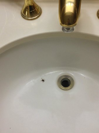 Bug in the sink at Cedar Park Inn and Suites