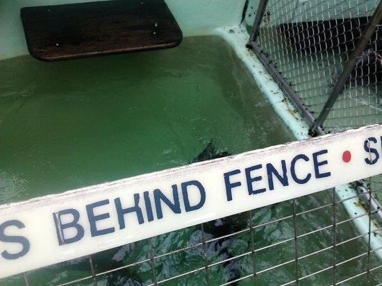 Morro Bay Aquarium: the seal moved again