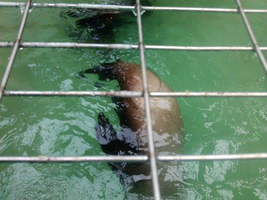 Morro Bay Aquarium: missed again