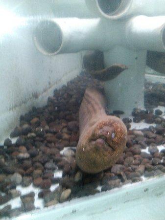 Morro Bay Aquarium: the moral eel