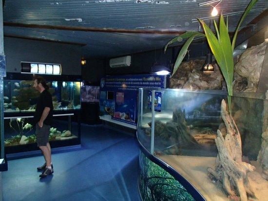 ... - Picture of Aquarium de la Guadeloupe, Le Gosier - TripAdvisor