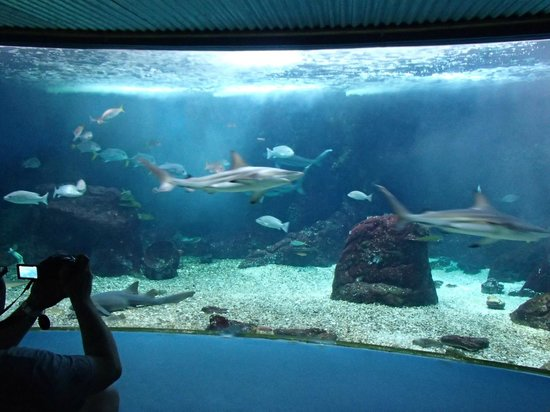 Bassin requins picture of aquarium de la guadeloupe for Aquarium bassin