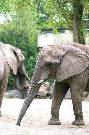 Zoo Duisburg : zoo