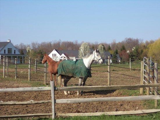 Inn Walden: Horses