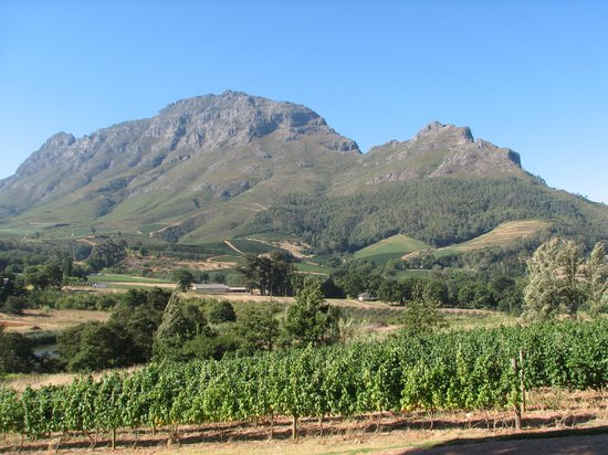 Alluvia Wine Estate: The view
