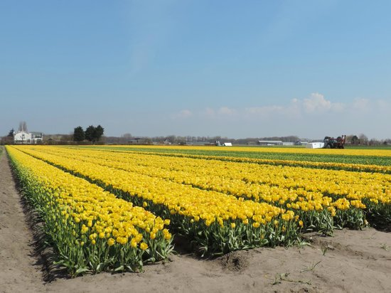 Bulb Region (Tulips in April & May)