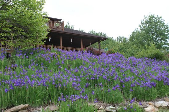 Mountain Song Inn: Terrace of iris
