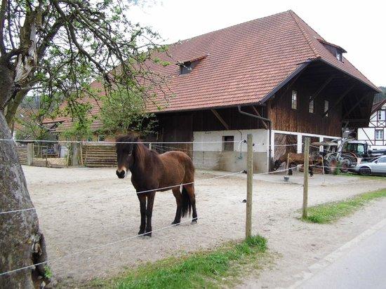 Schwarzwaldgasthof Zum goldenen Engel: Horses behind the hotel