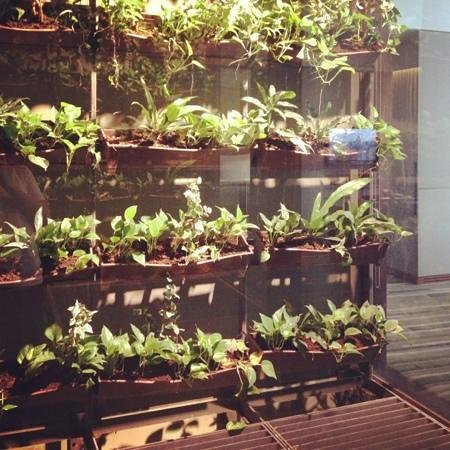 Hansar Bangkok Hotel: greeted by a beautiful botanic display