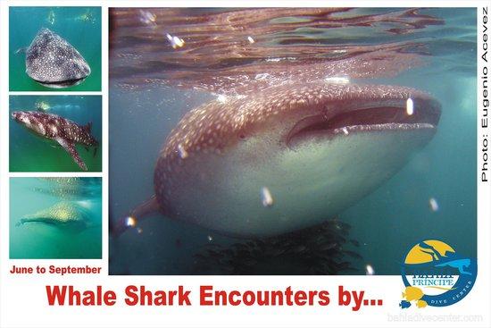 Beyond Earth MX: Whale shark encounters
