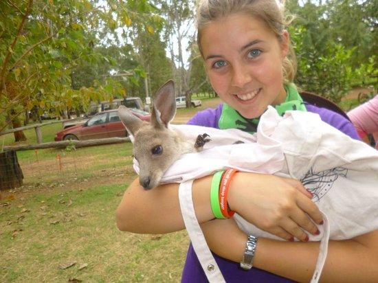 Kroombit Park: me and a baby kangaroo at KROOOMBIT!