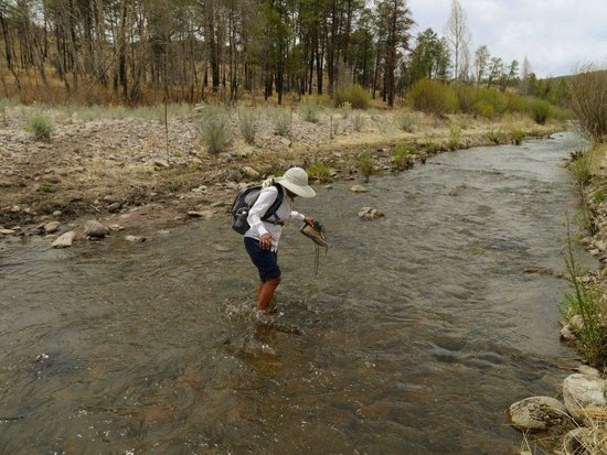 Gila Wilderness Area : Crossing streams was a treat for the weary feet