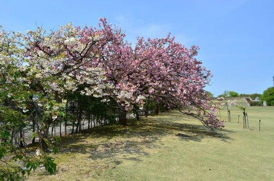 Botanic Gardens of Toyama: 花のプロムナード