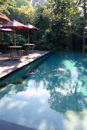Matahari Cottage Bed and Breakfast: Pool