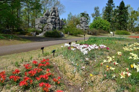 Botanic Gardens of Toyama: 石林の石