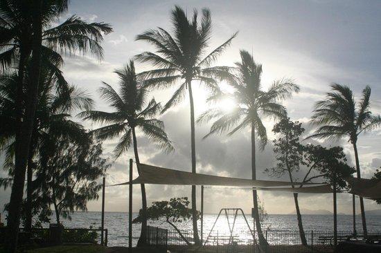 Palm Cove Beach : パームコーブビーチ