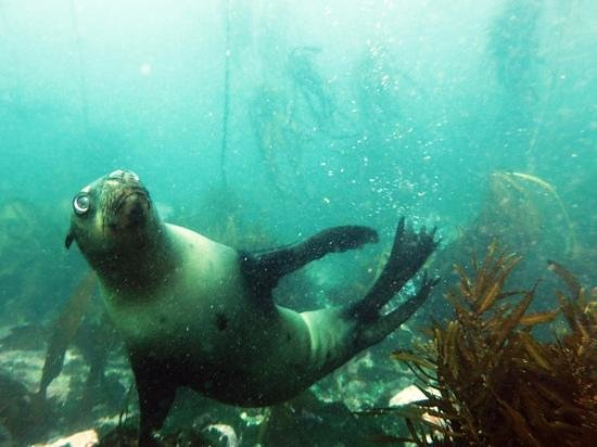Foto de Pisces Divers