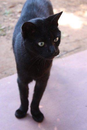 Mabuya Camp: the resident cat...