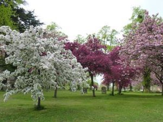 Evesham, UK: Blossom trees in full glory