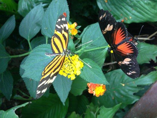 Montegrotto Terme, Italien: Farfalle