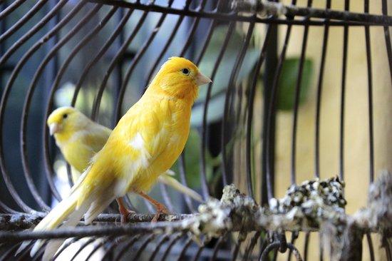 La Villa del Ensueno Hotel: Chirping Birds