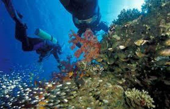Diving in aqaba gulf picture of aqaba adventure divers for Aqaba dive