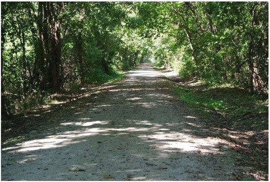 Katy Trail State Park: Tree tunnel