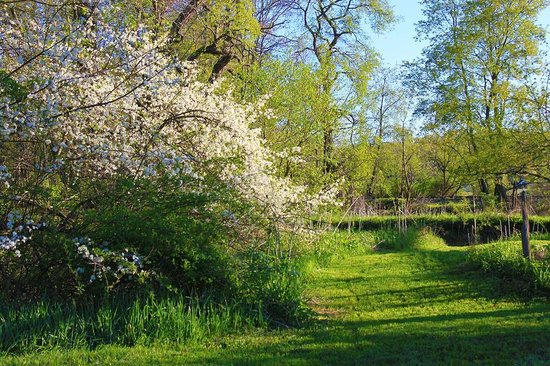 Pegasus Farm Campground: Spring Sarvis by the Creek