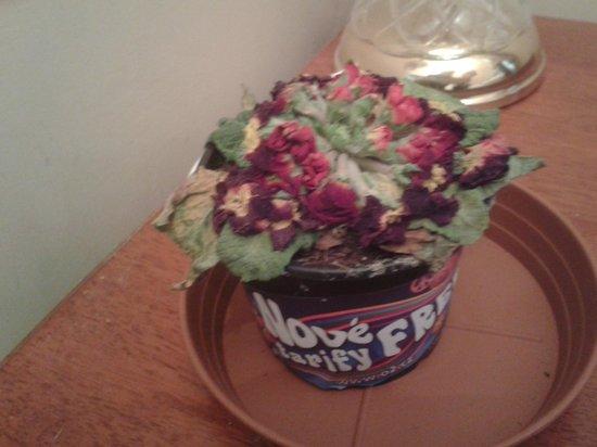 Prague Golden Age : Sad, dried up plant in plastic ice cream carton!
