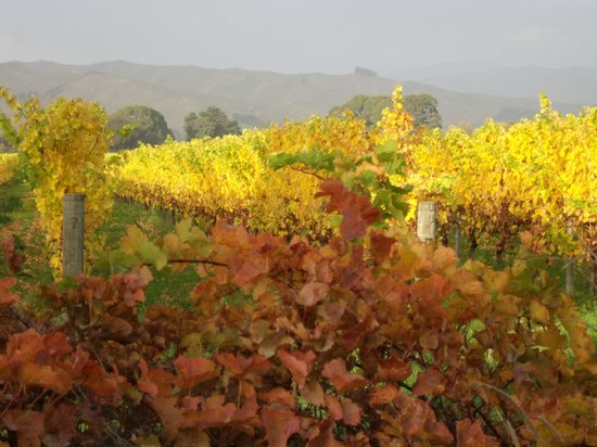 Driftwood Retreat and Eco-Tours: Autumn vineyards