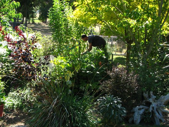 Driftwood Retreat and Eco-Tours: Will in the garden